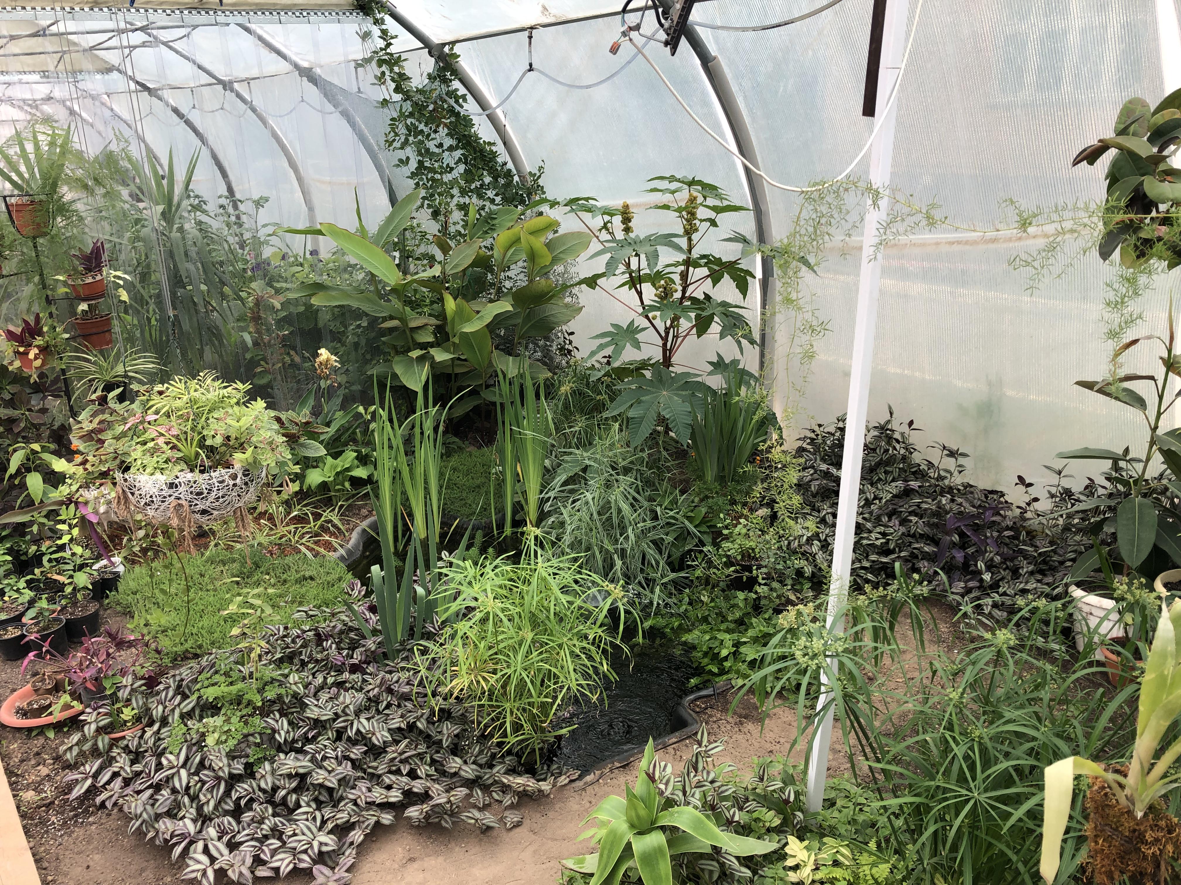 Настоящие тропические джунгли в школьной оранжерее